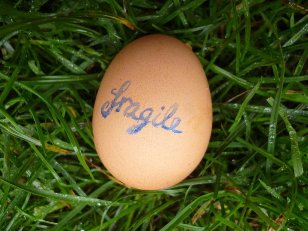 FragileGrass