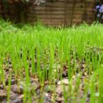 GrassNewGrowth